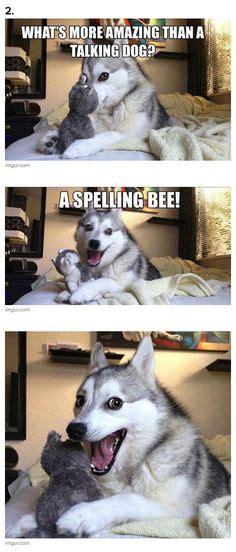 Pun Dog Meme - 1000 images about pun dog on pinterest pun dog bad pun dog and puns