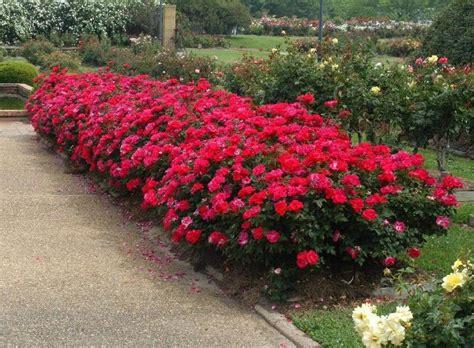 popular landscape plants keller landscape guide top landscape plant choice in north texas