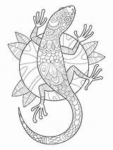 Gecko Coloring Lizard Pages Adults Adult Stress Tattoo Stencil Horned Illustration Drawing Animal Pattern Lace Anti Colouring Printable Lines Mandala sketch template