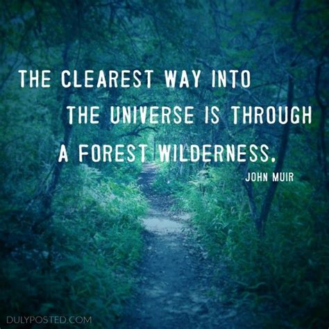 clearest    universe    forest