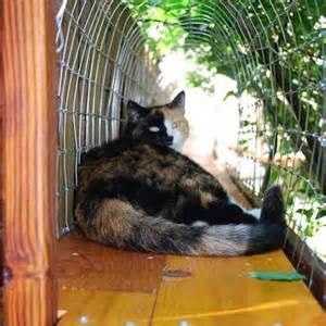 outdoor cat diy heated igloo for outdoor cats cuckoo4design
