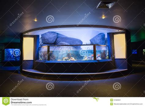 aquarium haut de gamme lit vers le haut d aquarium photo stock image 51580651