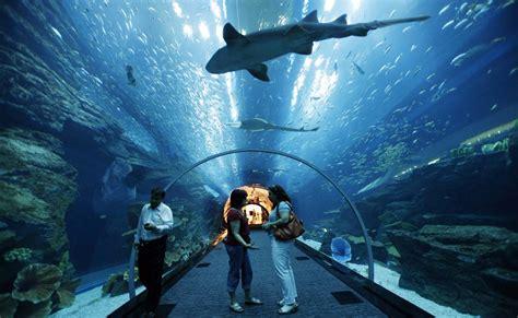 les plus beaux aquariums de les plus beaux aquariums du monde vaiana voyage