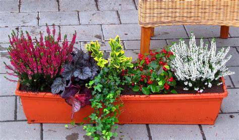 Winter Balkonpflanzen by Balkonpflanzen Set Pflanzen Versand Harro S Pflanzenwelt