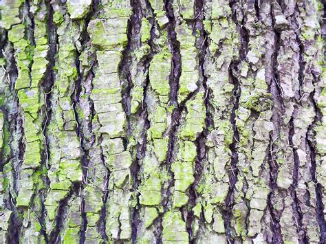 Tree Backgrounds by Wallpapers Tree Bark Wallpapers