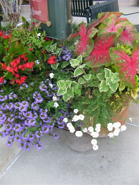 Pinterest Container Gardening Ideas Photograph  Garden Cont