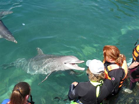 Abc Dolphin Trainer Academy Workshops!