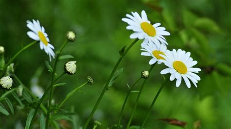 pflanze große blätter die 69 besten gr 252 ne hintergrundbilder