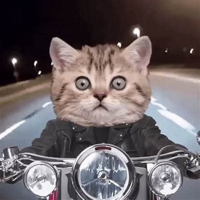 Twitch Gifs Giphy Cats Riding Lewd Motorcycles