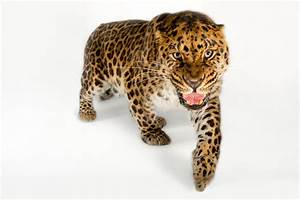 Stunning Pictures: Ten of the Rarest Animals on Earth ...