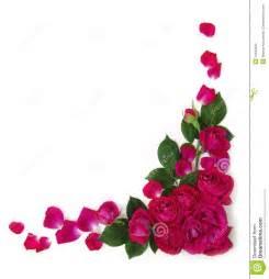 color roses rosas marco fotos de archivo imagen 14646893