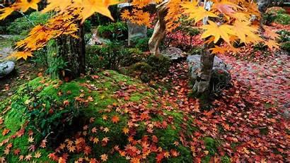 Enkoji Everywhere Maple Temple Leaf Autumn 10wallpaper
