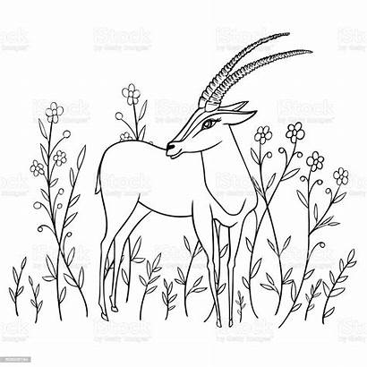 Gazelle Cartoon Animal Drawn Doodle Decorative Affiche