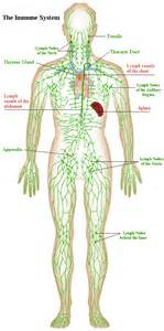 301 Moved Permanently  Immune System Lymph Nodes