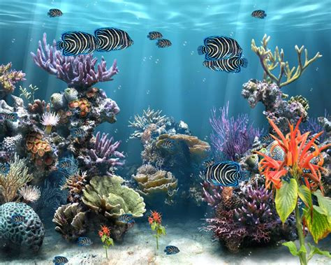 Animated Coral Reef Wallpaper - coral reef screensavers wallpaper wallpapersafari