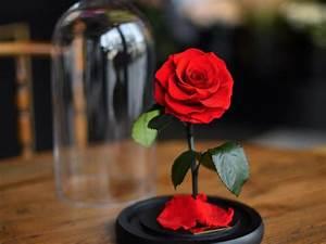 Rose Eternelle Sous Cloche : fleurs roses pr serv es stabilis es naturelles ternelles ~ Farleysfitness.com Idées de Décoration