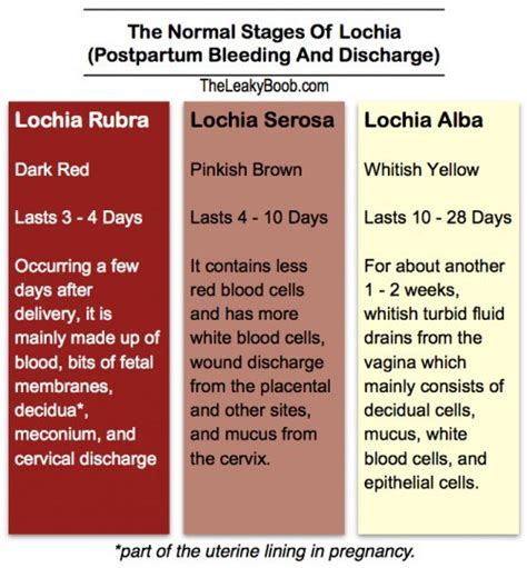 normal postpartum bleeding and discharge and the return of