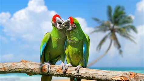 wallpaper parrot plumage branch exotic birds green animals