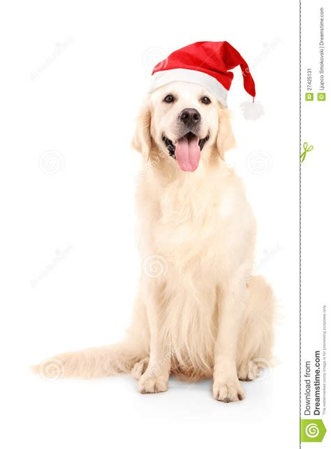 dog christmas hat a studio of a wearing a hat stock image image 27425131