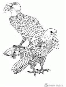 Adult Coloring Pages Birds