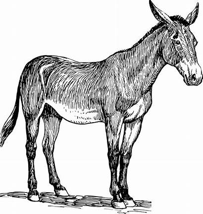 Donkey Clipart Mule Illustration Animal Horse Svg