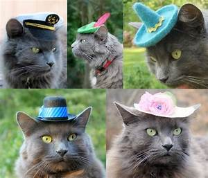 Hats For Cats - The Green Head