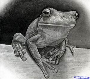 How to Draw a Realistic Frog, White-Lipped Tree Frog, Step ...