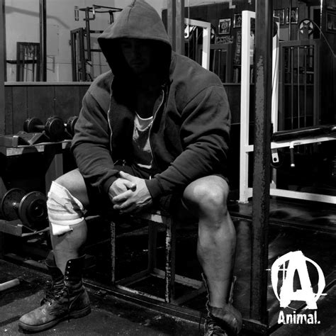 Permalink to Animal Bodybuilding Wallpaper
