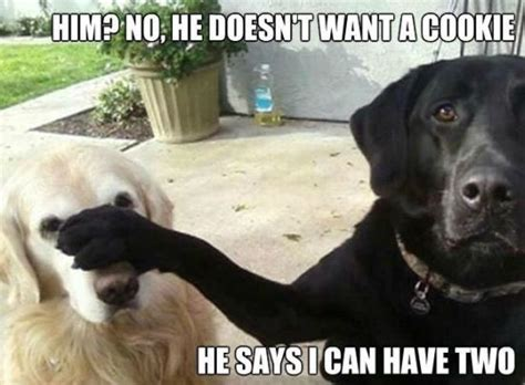 Want A Cookie Meme - 45 very funny cookies meme pictures that will make you laugh