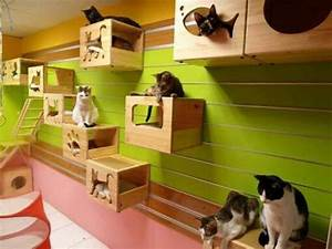 Cat playroom ideas for creating a in your