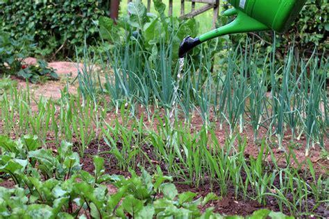 Gemüsebeet Richtig Anlegen by Gem 252 Sebeet Neu Anlegen Richtig Planen F 252 R Beste Ertr 228 Ge