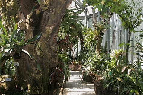 Botanischer Garten Berlin Gewächshaus by Der Botanische Garten Berlin