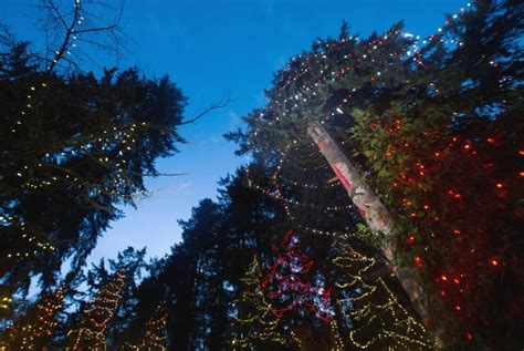 tallest xmas teee in tge workf capilano tree among the world s tallest