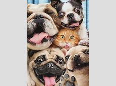 DogCat Photo Booth Funny Pop Up Stand Out Funny Birthday