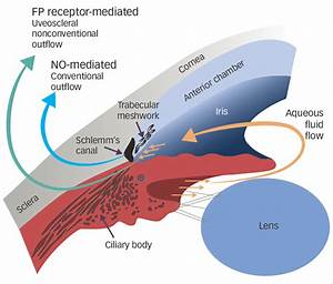 Intraocular Pressure Homeostasis And The Dual Activity Of