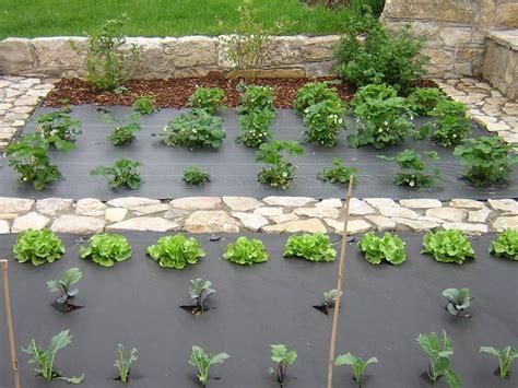 Enorm Vlies Garten 4 F C3 Bcr Pflanzen Kreuzf B6rmig