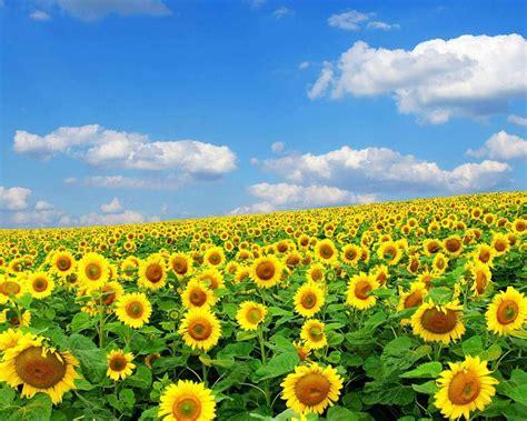 Spring Flowers Backgrounds Desktop  Wallpaper Cave