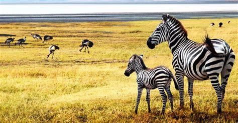 3 Days Serengeti Safari - serengeti safaris, tanzania safaris