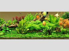25+ Aquarium Backgrounds, Wallpapers, Images, Pictures