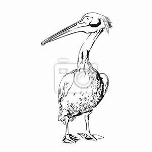 Dessin Fait Main : pelican dessin fait la main vector illustration ~ Dallasstarsshop.com Idées de Décoration