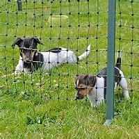 hundezaun das ist der richtige zaun fuer hunde