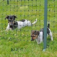 Kleiner Zaun Für Hunde : hundezaun das ist der richtige zaun f r hunde ~ Frokenaadalensverden.com Haus und Dekorationen