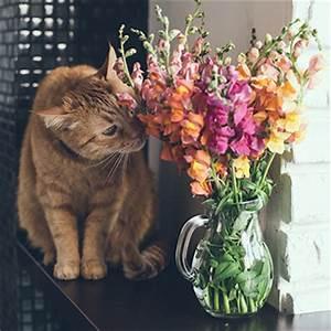 Welche Pflanzen Sind Nicht Giftig Für Katzen : welche pflanzen sind f r katzen giftig tierisch wohnen ~ Eleganceandgraceweddings.com Haus und Dekorationen