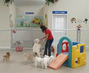 What services a doggie day care provides you for Dog day care center
