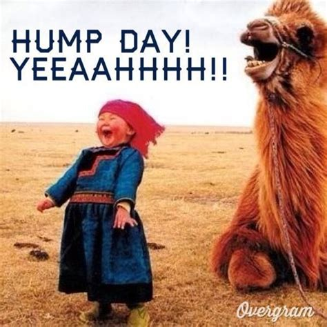 Hump Day Meme Dirty - wednesday memes funny happy wednesday images