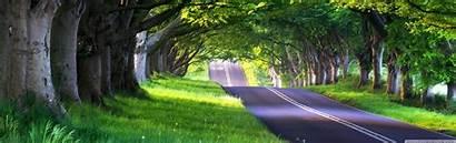 Street Lined Tree Luxury Hire Rental India