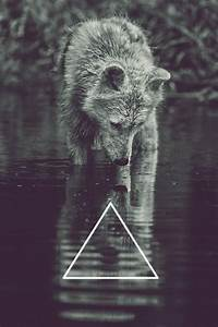 photography Black and White wolf beautiful perfect hipster ...