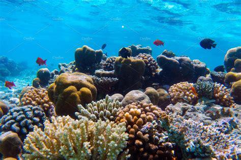 underwater coral reef  fish  indian ocean maldives