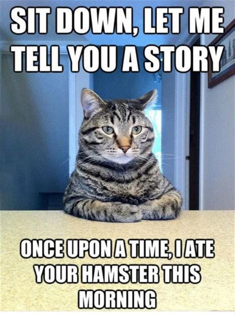 Funny Pictures Sit Down Let Me Tell You A Cat Story Meme