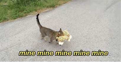 Funny Animal Cats Cat Tiger Gifs Buzzfeed